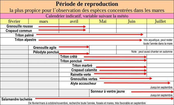 Période de reproduction