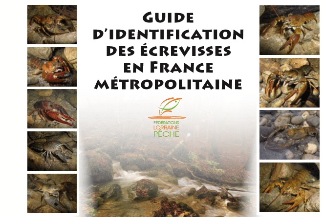 Guide d'identification des Ecrevisses en France Métropolitaine