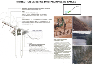Protection de berge par fascinage de saules