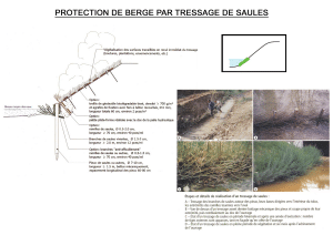 Protection de berge par tressage de saules